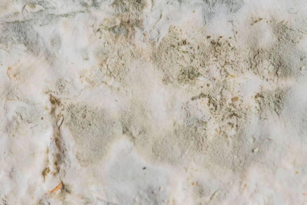 Crottin de Chavignol NIèvre
